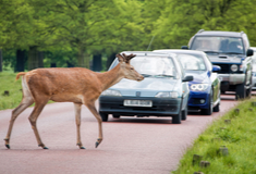 Watch out for deer on the roads