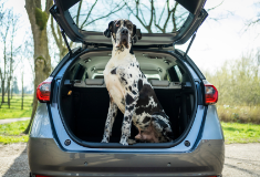 Pupgrade Your Car