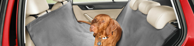 Driving with your dog this summer? Here are 13 top tips!