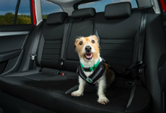 Dogs in hot cars: RSPCA and ŠKODA team up to raise awareness