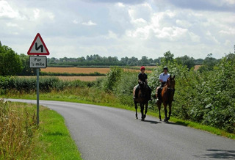 Hold your horses. How to pass horses safely on the road